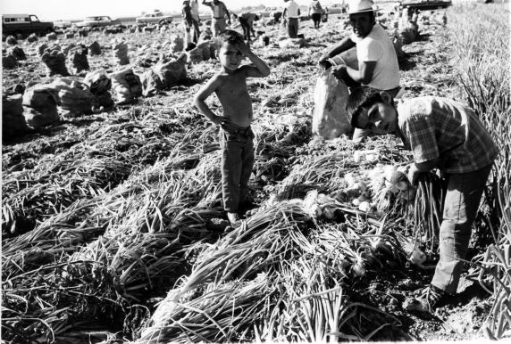 (210) Child Labor, Field Work, California,  c. 1960s