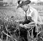 (28280) Ethnic Communities, Korean, Elder Care, Detroit, 1990
