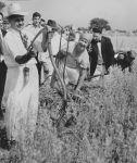 (28309) Ethnic Communities, Hungarian, Festivals, 1936