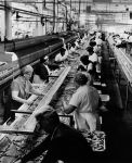 (29159) Food Service Employees, Asparagus Canners