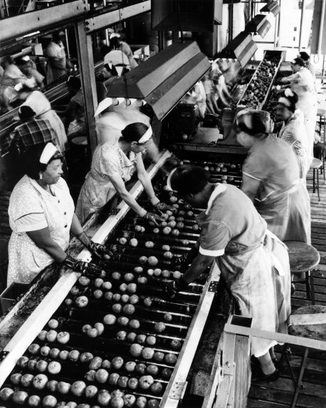 (29160) Food Service Employees, Tomato Canners