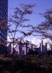 (30695) Urban Renewal, Lafayette Park, Detroit, 1966